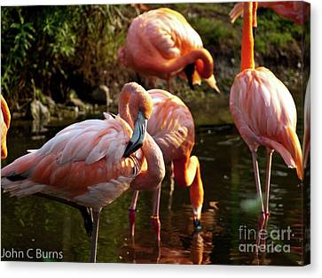Canvas Print featuring the photograph Flamingos by John Burns