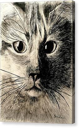 Flashy Lady 2 Canvas Print by Lynda K Boardman
