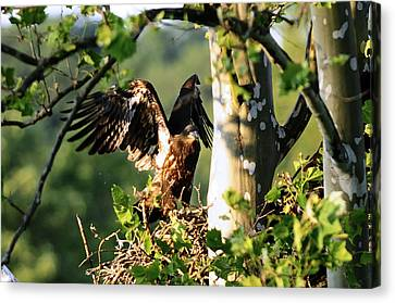 Canvas Print featuring the photograph Fledgling Testing The Wind by Randall Branham