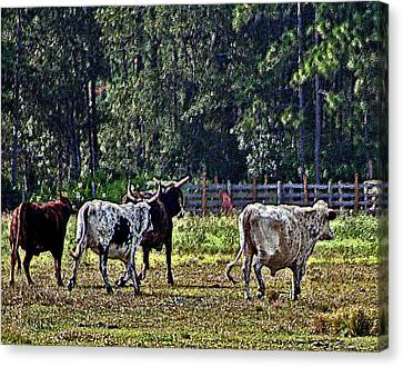 Fleeing Cows Of 441 Canvas Print by Lou Belcher