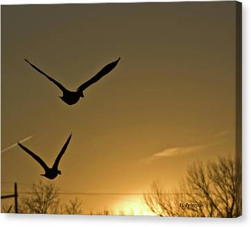Flight At Sunset Canvas Print by Edward Peterson