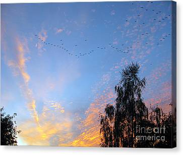Flight Into The Sunset Canvas Print by Ausra Huntington nee Paulauskaite