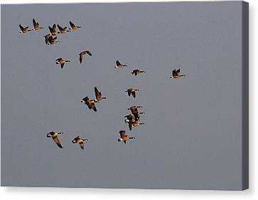 Flight - Near Evening Canvas Print