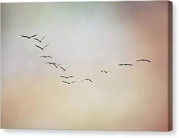Flight Of Pelicans Canvas Print by Daniela Duncan