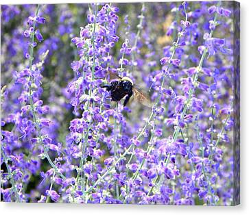 Flight Of The Bumble Bee Canvas Print by Rhiannon Hamm