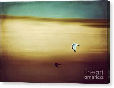 Flight Over The Beach Canvas Print by Hannes Cmarits