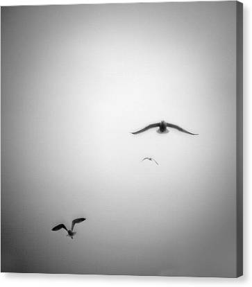 Flight Canvas Print by Peter Gnas