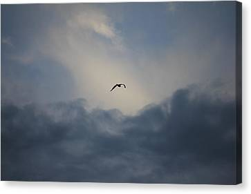 Canvas Print featuring the photograph Flight To Heaven by Penny Meyers
