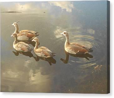 Floating Along Canvas Print