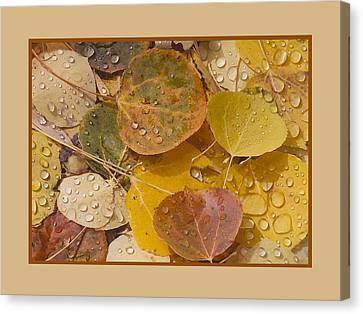 Floating Aspen Leaves Canvas Print