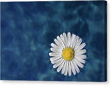 Floating Daisy Canvas Print by Andrea Mucelli