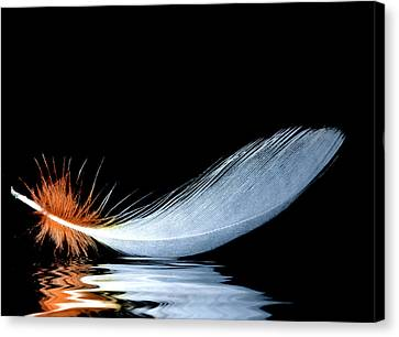 Frailty Canvas Print - Floating Feather by Jean Noren