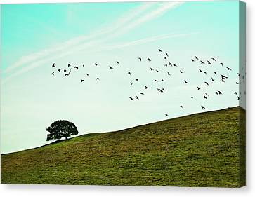 Flock Of Birds Canvas Print by Where Photography meets Graphic Design.