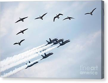 Flock Of Canada Geese At Air Show Canvas Print by Oleksiy Maksymenko