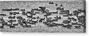 Canvas Print featuring the photograph Flockin' Around by Kevin Munro