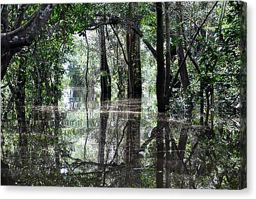 Flooded Amazon Rainforest Canvas Print by Oliver J Davis Photography
