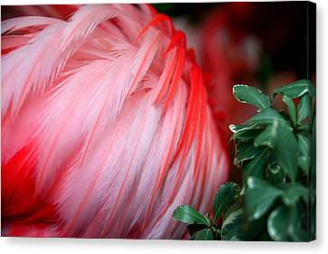 Canvas Print featuring the photograph Flora And Fauna Number One by Lon Casler Bixby