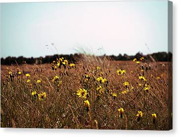 Flora Canvas Print by Photography by Daniel Hans Peter Christensen