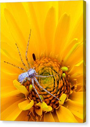 Floral Spider Canvas Print by Mark J Seefeldt
