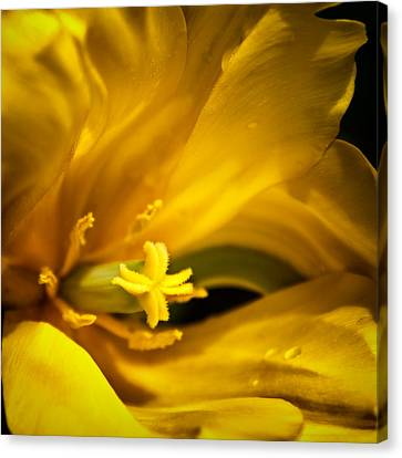 Floral Star Canvas Print by Denis Lemay