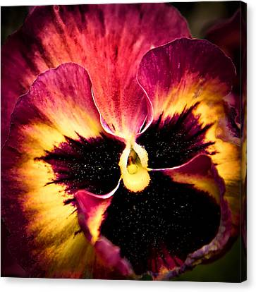 Floral Sunburst Canvas Print