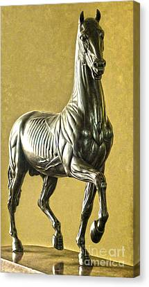 Florence Italy - Anatomical Horse Statue - Medici Palace Canvas Print