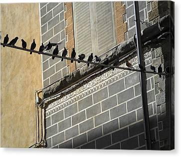 Canvas Print featuring the photograph Florentine Pigeons by Laurel Best