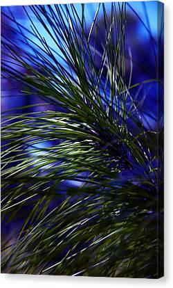 Florida Grass Canvas Print