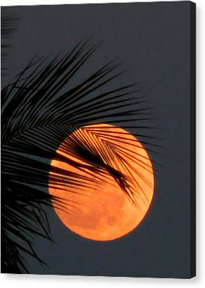 Florida Moonrise Canvas Print by Peg Urban