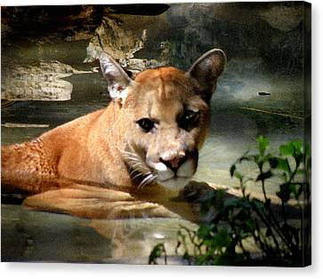 Florida Panther Canvas Print by Grace Dillon