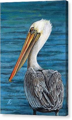 Florida Pelican Canvas Print by Peggy Dreher