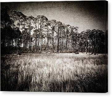 Florida Pine 2 Canvas Print by Skip Nall