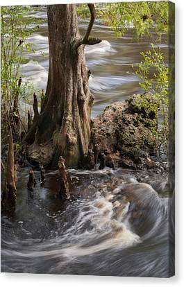 Florida Rapids Canvas Print by Steven Sparks