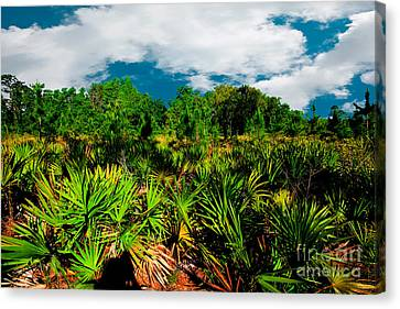 Florida Scrub 1 Canvas Print by Carson Wilcox