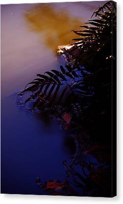 Florida Sunset 2 Canvas Print