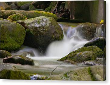 Canvas Print featuring the photograph Flow by Cindy Haggerty