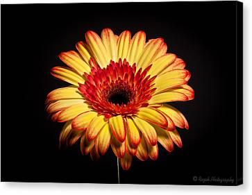 Canvas Print - Flower by Alhaji Samura