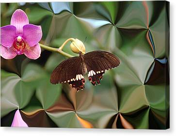 Flower And Butterfly Canvas Print by Aimee L Maher Photography and Art Visit ALMGallerydotcom