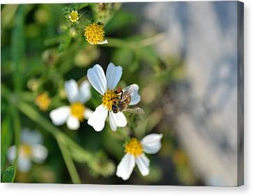 Jacksonville Arboretum Canvas Print - Flower And Insect  by Ahmet Ozbek