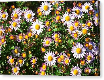 Canvas Print featuring the photograph Flower Assault by Jim Moore
