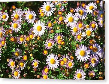 Flower Assault Canvas Print by Jim Moore