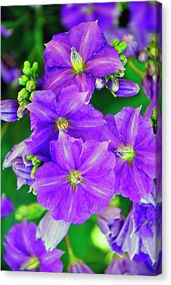 Flower At Houmas House Canvas Print by Helen Haw