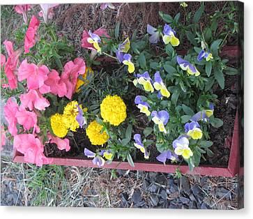 Flower Basket 2 Canvas Print by Amy Bradley