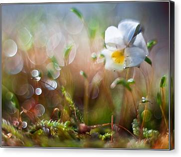 Flower Bell Canvas Print by Adrian Krol