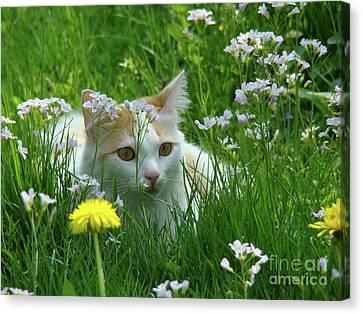 Flower Cat Canvas Print by Bruno Santoro