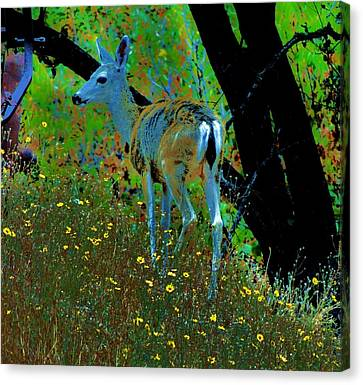 Flower Child Canvas Print by Helen Carson