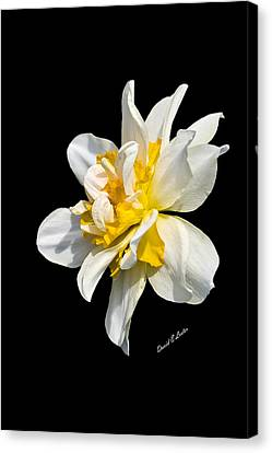 Canvas Print featuring the photograph Flower by David Lester