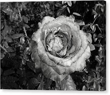 Flower Fairhope Alabama Canvas Print by Floyd Smith