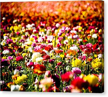 Flower Field Canvas Print