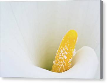 Flower Canvas Print by foto by Chandler Chou